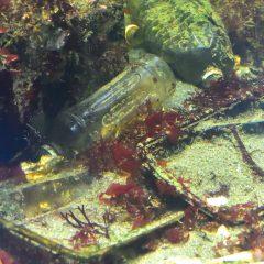 海洋プラスチック問題